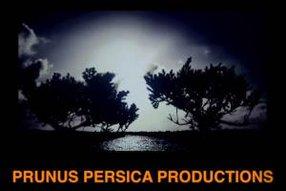 PRUNUS PERSICA PRODUCTIONS