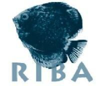 RIBA FILM INTERNATIONAL BV
